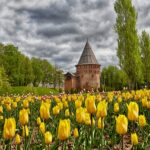 Тюльпаны и Башня Громовая